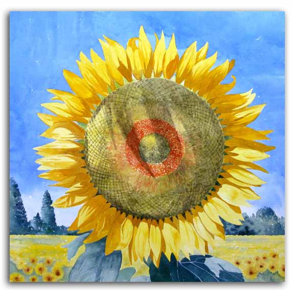 Print of watercolour painting of sunflower, by artist Lesley Olver